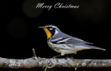 Yellow-throated Warblern Merry Christmas.jpg