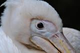 d90_december_birds_bugs