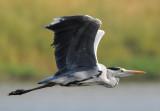d90_birds_jan_2009