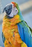 Macaw Landing Foundation
