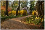Pathway to Spring