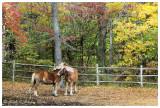 Autumn Romance