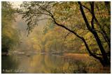 Misty Morning  Along Tohickon Creek