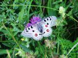 Butterfly Objects