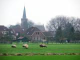 Sheep and village