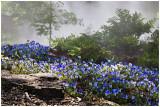 Dallas Arboretum 2009