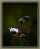 Spent Flower