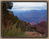 Navajo Point Flowers