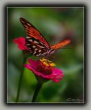 Birds, Butterflies, Bugs, Etc......