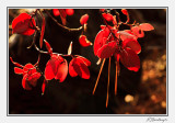 Backlit Autumn Foliage