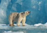 Spitsbergen (Svalbard) 2010