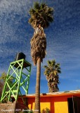 """Towering Palms"""