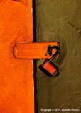 """Orange Hasp"", 3rd place 10/19/09 LVCC 10/19/09 LVCC Pictorial Projected Images - Basic"