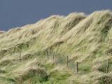 Clare - coast road