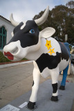 Cow Parade 2009 in La Jolla