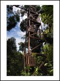 Bukit Bangkirai, East Borneo