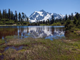 Picture Lake with Mt. Shuksan