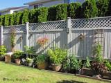 Backyard fence line.JPG
