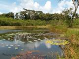 Pond at Hilton golf course.JPG