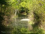 Flooded trail, Sir Winston Churchill P.P.JPG