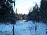 Whitemud Creek in winter.JPG
