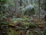 Heritage Forest, Qualicum Beach 1.jpg