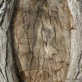 Wood textures.jpg