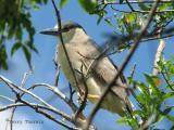 Black-crowned Night Heron 2.jpg