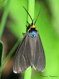Moths - Lepidoptera