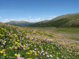 Wildflowers at La Creche 5.jpg