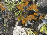Lichen encrusted rock.jpg