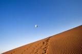 Pigeon in Desert !