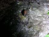 Snail D Beaverbrook Kanata 30June2008 001 3.jpg