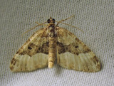 Epirrhoe alternata - 7394E - White-banded Toothed Carpet