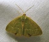 Hethemia pistasciaria - 7084 - Pistachio Emerald