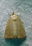 moth-21-06-2010-224.jpg