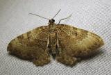 moth-29-06-2010-119.jpg