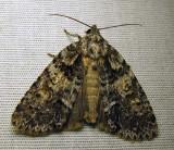 moth-29-06-2010-120.jpg