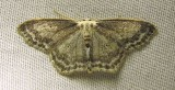 moth-03-07-2010-203.jpg