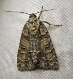 moth-03-07-2010-205.jpg