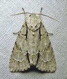moth-03-07-2010-218.jpg