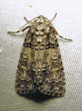 moth-03-07-2010-222.jpg