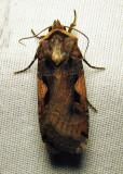 moth-05-07-2010-104.jpg
