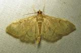 moth-07-07-2010-205.jpg