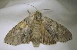 moth-08-07-2010-303.jpg