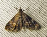 moth-08-07-2010-226.jpg