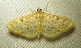 moth-08-07-2010-231.jpg