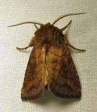 moth-12-07-2010-1000-1.jpg