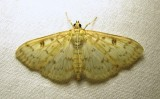 moth-15-07-2010-2006.jpg