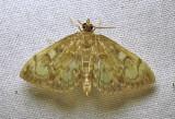 moth-16-07-2010-3005.jpg